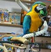 free macaw parrots for free to any homes